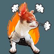 Salim the Funny Dog