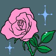 PINK ROSE in Korean