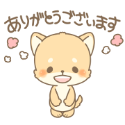 Polite and gentle Shiba Inu Kun