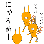 Orange rabbits