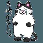 yoshizaki Cat