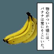 forever banana