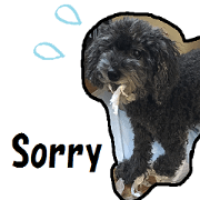 english sticker of a black poodle