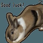 invective rabbits