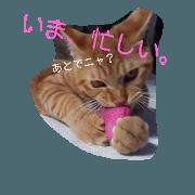 brown cat stamp