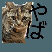 Ycats2