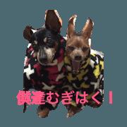 tetubon 's  dogs