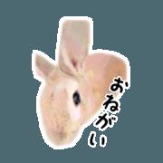 Oren, a rabbit,Daily.