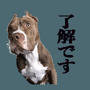 RUKASUTA Sticker