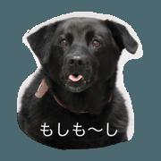 Dog Cafe TAMURA Maui