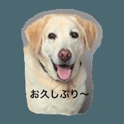 Dog Cafe TAMURA Mac