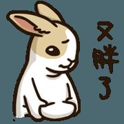 面具兔-動動兔生1
