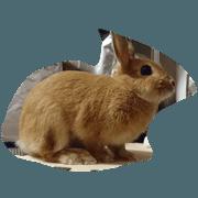 rabbit can