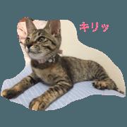 cat is KINACO