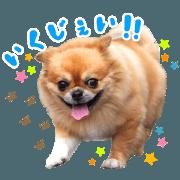 Pet dog achu