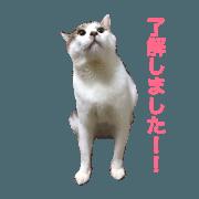 azusa of cat