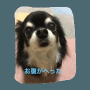 dogs Ann&Moko
