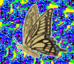 19969067