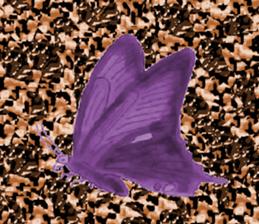 19969069