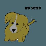 Animal stinker 4