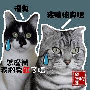 cat *2