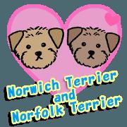 Norwich Terrier and Norfolk Terrier