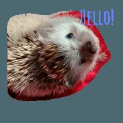 Poopy The Hedgehog