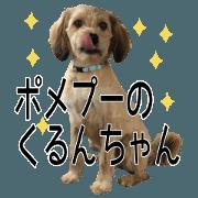 "Pumepoo""日本小狗""的Kurun chan"