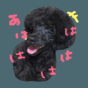 blackpoodle'sphoto