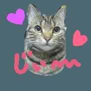 Cute cat LOVELOVE