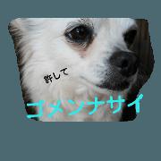 cute dog ,koro