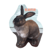 懶兔兔&笨鳥鳥