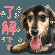 Daily use stickers (Miniature Dachshund)