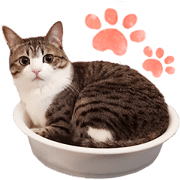 Mischievous cat Suzume