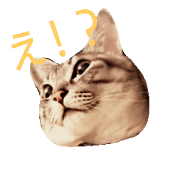 silver tabby cat hinachan
