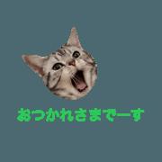 umeboshi sticker
