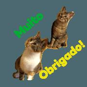 Japanese cats family