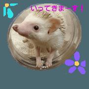 hedgehog suzu 3