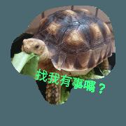 龜日子(1)