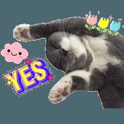 Mini小胖貓