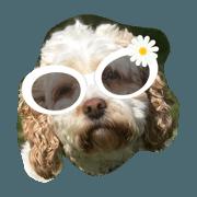 Daisy Do. 2