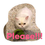 Cat Aodton