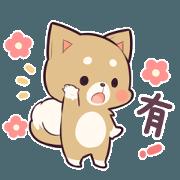 柴犬MARO2