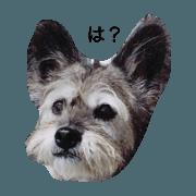 ryoumaossan