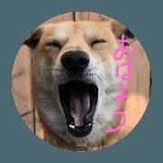 Kotaro the Dog