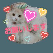 cat's hanachan