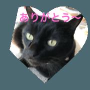 cuty cats are fine