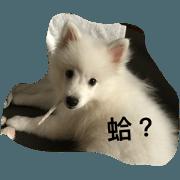 雪球狗狗的日常生活