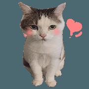 萌貓咪咪醬 第2彈