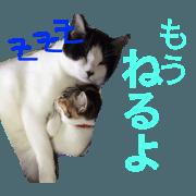 cat NEKO's